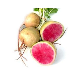 Local Organic Radishes, Watermelon- Code#: PR100574LPO