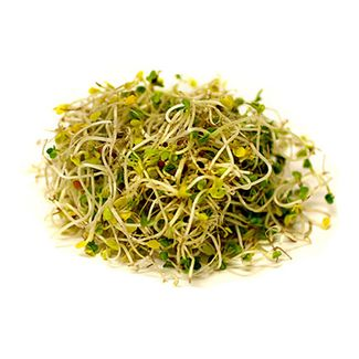 Local Organic Sprouts, Broccoli- Code#: PR100260LCO
