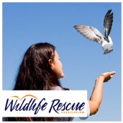 Donate a gift to Wildlife Rescue Association of BC- Code#: WILDBC